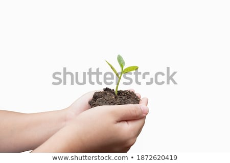 woman holding sapling in heap of earth Stock photo © IS2