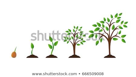 дерево растущий почвы вектора Cartoon иллюстрация Сток-фото © RAStudio