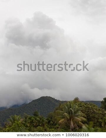 嵐の 雲 公園 マレーシア 木 山 ストックフォト © Juhku