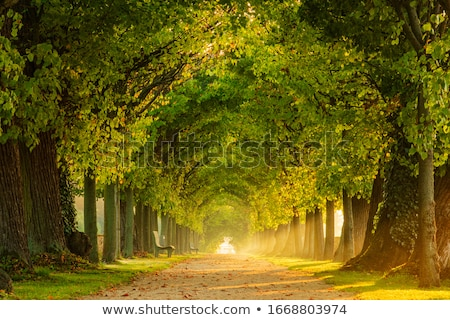Avenue from leaves Stock photo © Pozn