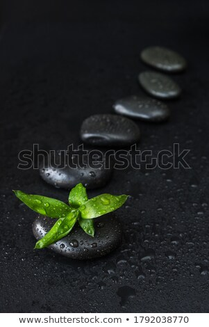 Black stones and green leaves, covered with water drops Stock photo © Epitavi