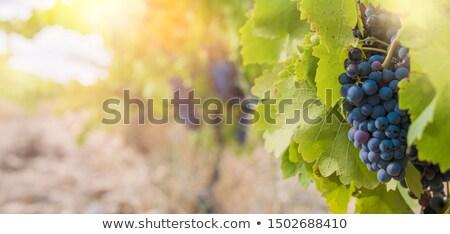 cesta · fundo · verde · azul · preto - foto stock © milanmarkovic78