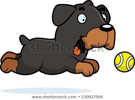 Rajz rottweiler labda illusztráció állat mosolyog Stock fotó © cthoman