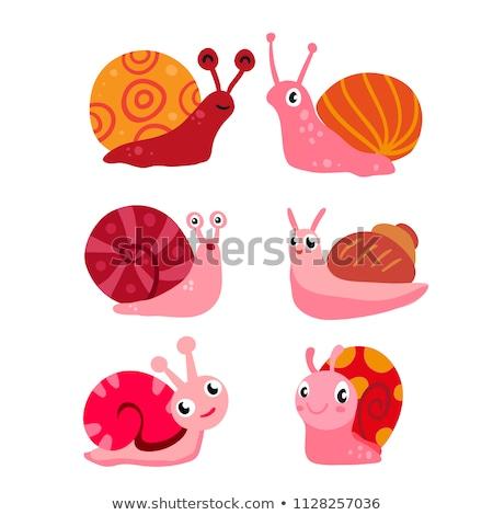 A group of snails Stock photo © colematt