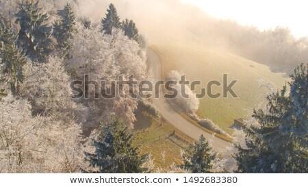 Yol puslu orman güneş sabah Stok fotoğraf © joyr