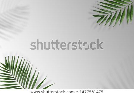 Beautiful green leaf of fern on a gray background with bright light and copy space. Natural layout f Stock photo © artjazz