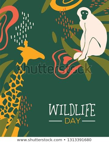 Fauna selvatica giorno giungla carta scimmie felice Foto d'archivio © cienpies