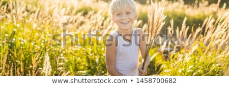 descuidado · menino · amarelo · grama · prado · outono - foto stock © galitskaya