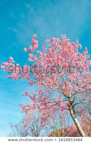 Oddziału różowy kwiat kwiaty wiosna Błękitne niebo Zdjęcia stock © sarahdoow