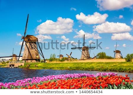 windmill in Rotterdam Stock photo © prill