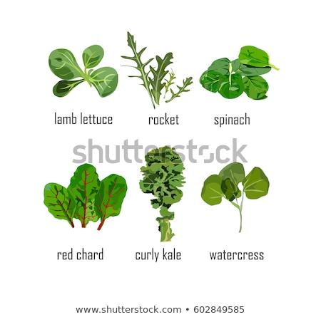 Fresh organic vegetables icon set isolated, healthy food, artichoke, turnip, mushrooms, asparagus, c Stock photo © MarySan