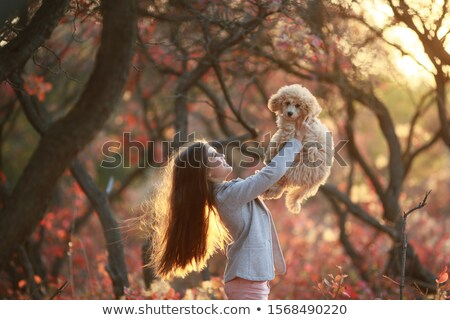 Girl in the autumn forest holding a dog breed dwarf poodle Stock photo © ElenaBatkova