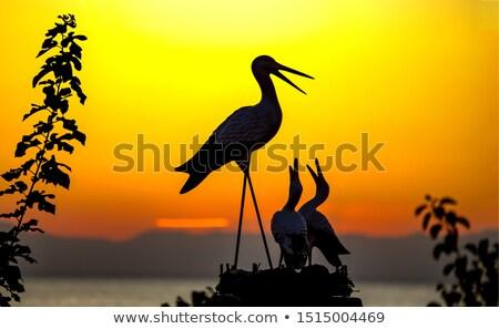 Stock photo: family of storks