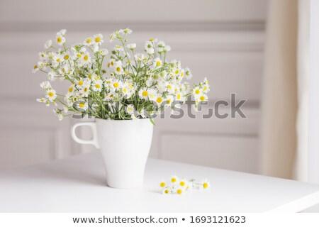 Branco camomila Foto stock © karandaev