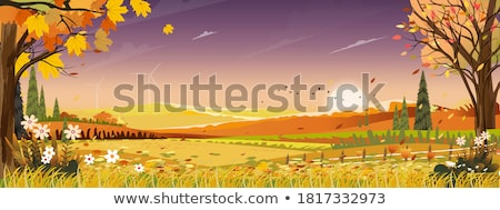 ősz mező kilátás tájkép égbolt fa Stock fotó © frank11