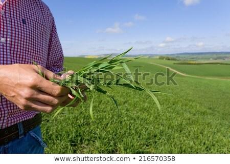 Farmer inspecting crop Stock photo © photography33