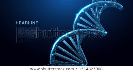 ダブル · DNA鑑定を · 遺伝学 · 染色体 · 金 - ストックフォト © burakowski