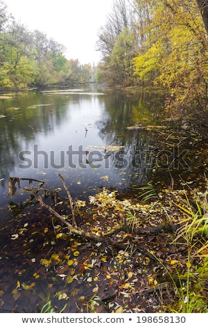 Pequeno danúbio rio outono Eslováquia árvore Foto stock © phbcz