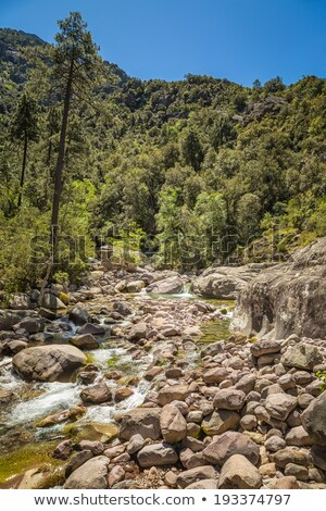 реке работает Корсика лес воды Сток-фото © Joningall