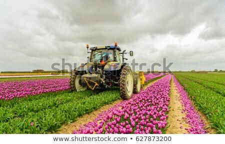 линия сельскохозяйственный пейзаж трава лет области Сток-фото © lightpoet