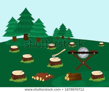 森林 小さな オーク 木 立って コンパートメント ストックフォト © hraska