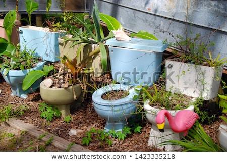 toilet bowl in grass stock photo © frameangel