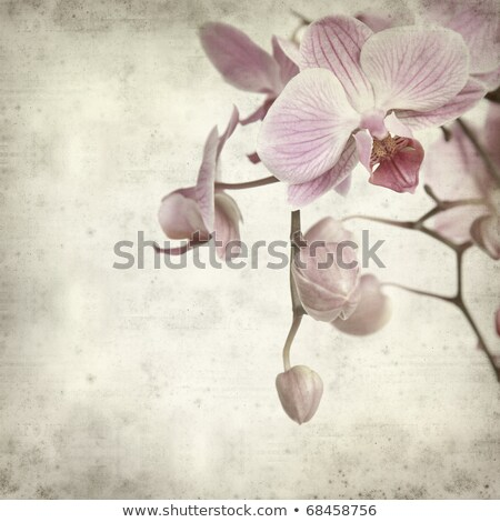 textured old paper background with  phalaenopsis  stock photo © Tamara_K
