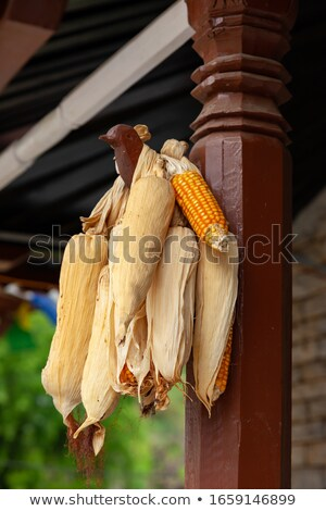 House with corn cobs hanged to dry in Nepal Stock photo © dutourdumonde