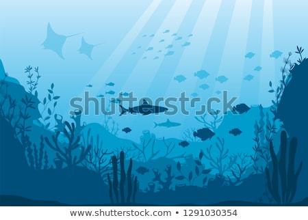 Haaien vis oceaan illustratie natuur zee Stockfoto © bluering
