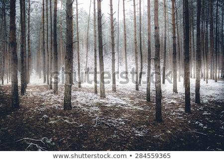 misty · inverno · foresta · all'alba · percorso · mattina - foto d'archivio © massonforstock