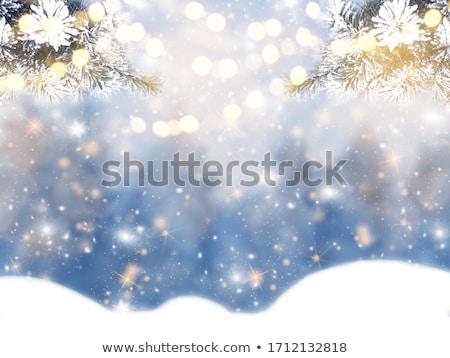 Fenyő ág hó kúp tél erdő Stock fotó © dolgachov
