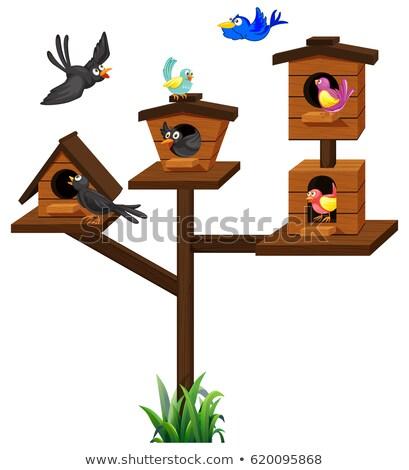 Different types of birds in birdcage Stock photo © colematt