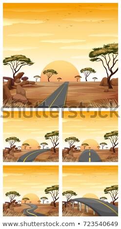Cinco estradas savana campo ilustração pôr do sol Foto stock © colematt