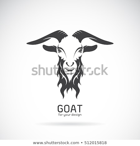 white male goat portrait Stock photo © taviphoto