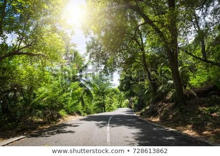 Palma floresta vazio estrada ilustração paisagem Foto stock © colematt