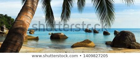 Widoku palma piaszczysty plaży bujny Zdjęcia stock © amok
