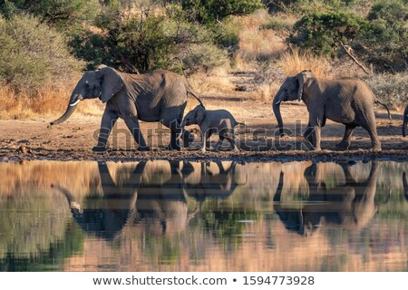 Elephant herd walking next to the water. stock photo © simoneeman
