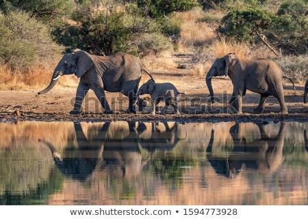 象 群れ 徒歩 水 公園 ストックフォト © simoneeman