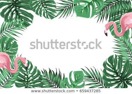flamingo pink bird with exotic leaves blank banner stock photo © robuart