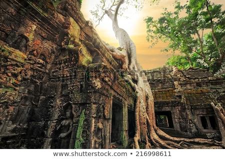 fa · templom · összetett · hatalmas · gyökerek · rom - stock fotó © lichtmeister