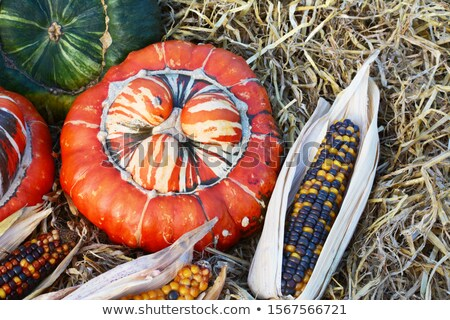 Striped Turks Turban gourd with ornamental Fiesta sweetcorn Stock photo © sarahdoow
