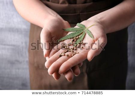 Magok cannabis illusztráció fű levél levelek Stock fotó © adrenalina