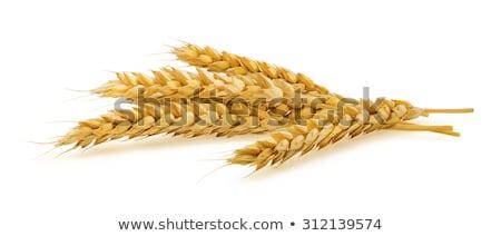 Сток-фото: пшеницы · ушки · изолированный · белый · фон