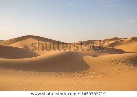 golden sand dunes Stock photo © morrbyte