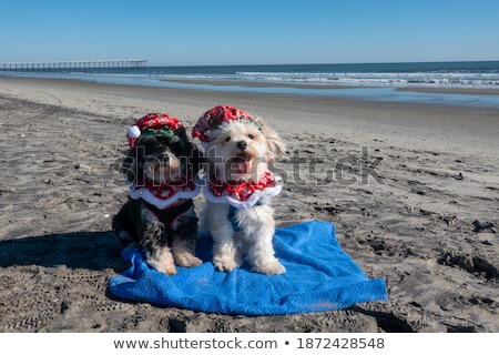 Couple posing by the water's edge Stock photo © photography33