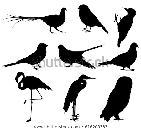 silhouette of bullfinch Stock photo © perysty