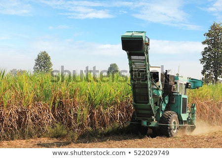 сахарного · тростника · урожай · тропические · Квинсленд · Австралия · работу - Сток-фото © sherjaca