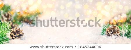 cone · neve · sempre-viva · ramo · natureza - foto stock © Alenmax