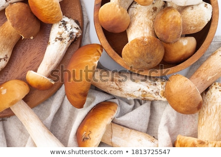 Boletus Stock photo © zhekos