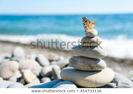 borboleta · rocha · belo · grande · marrom - foto stock © thomaseder